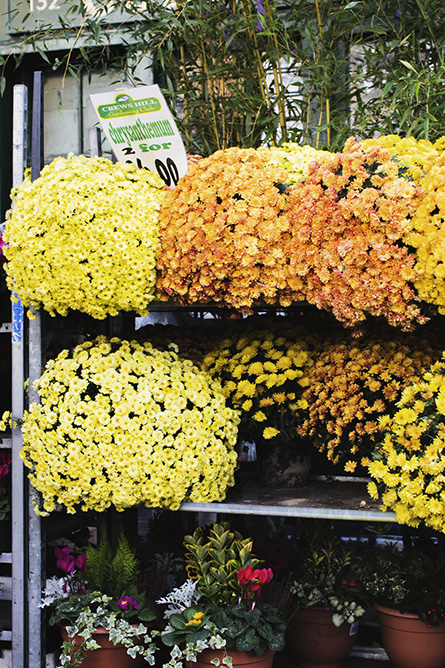 Park-and-Cube_Broadway-Flower-Market-Winter_011