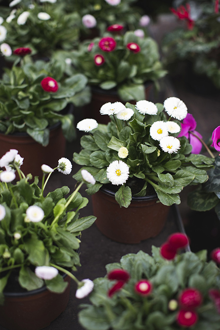 ParkandCube_Flower-Market-Spring_12