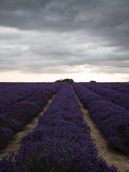parkncube_cartier-lavendar-field_008